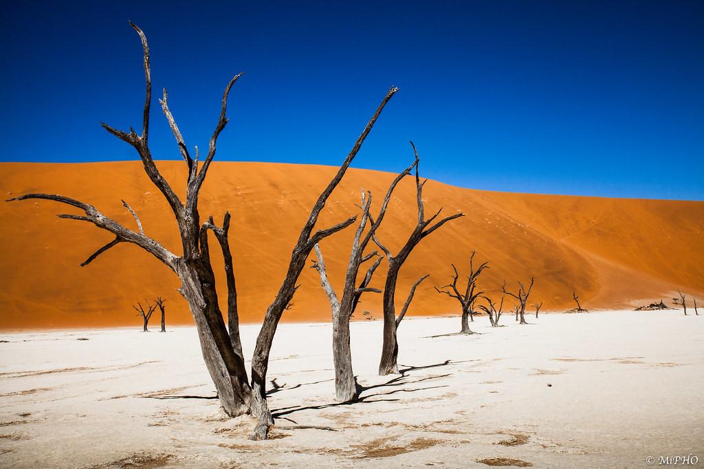 safarikids-pics-setting-africa6.jpg