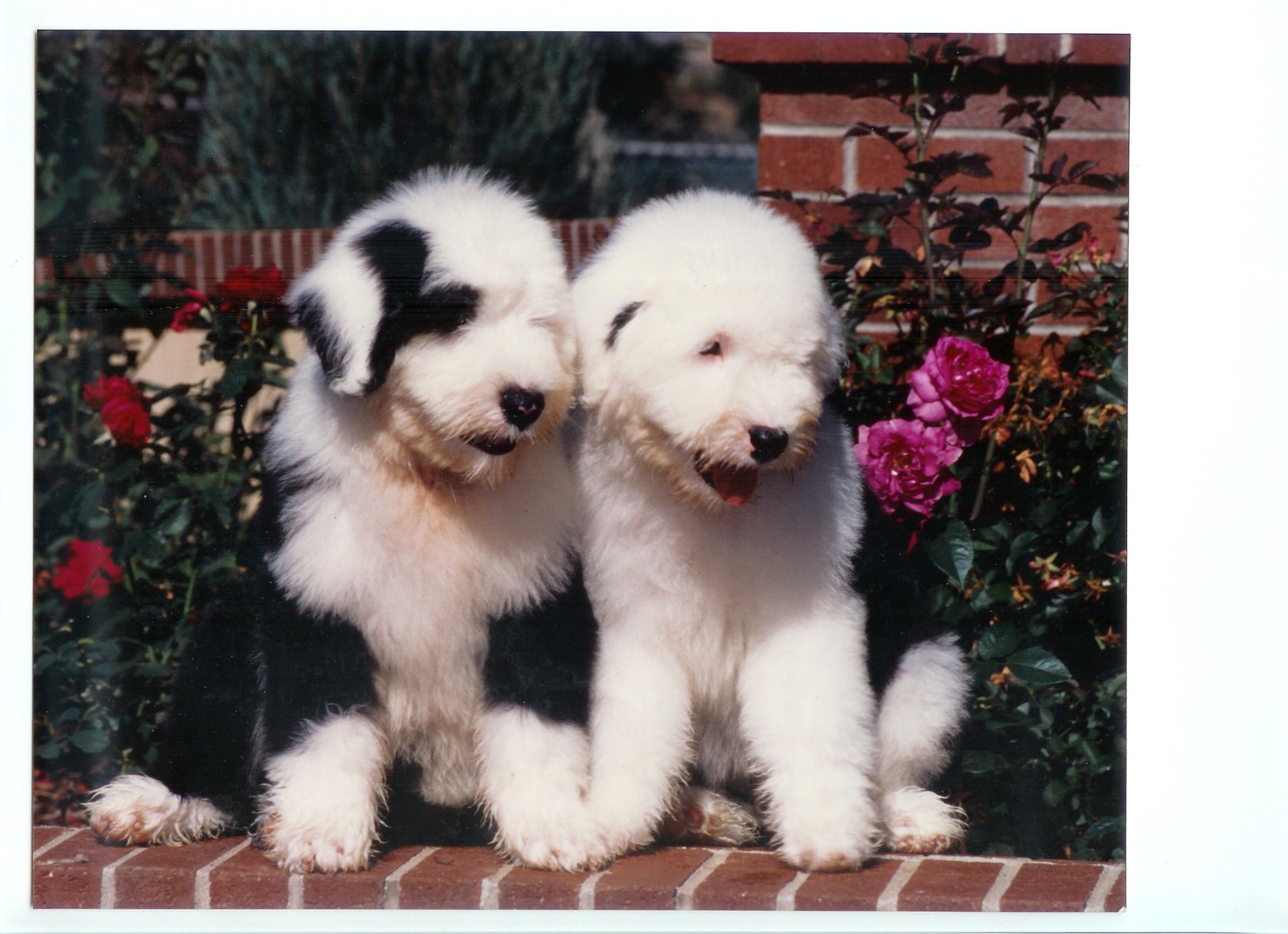 Puppy Class - Begins June 27th