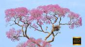 safarikids-pics-setting-africa2.jpg