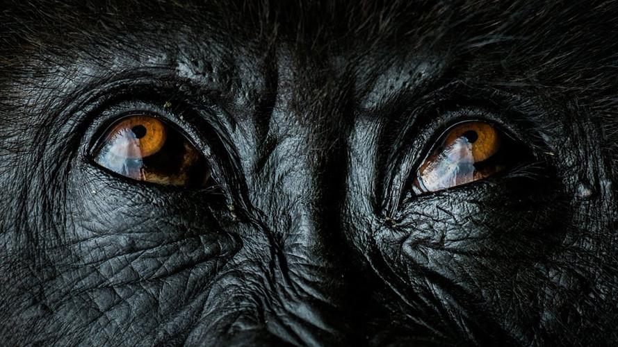 safarikids-pics-setting-africa16.jpg