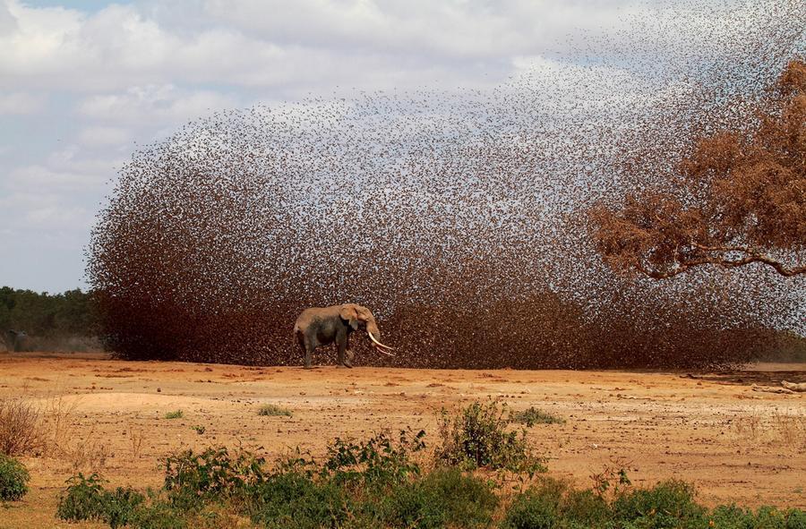 safarikids-pics-setting-africa15.jpg