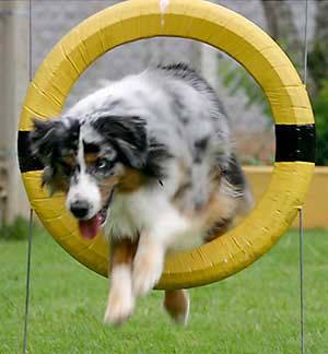 Agility Class - Begins June 30th