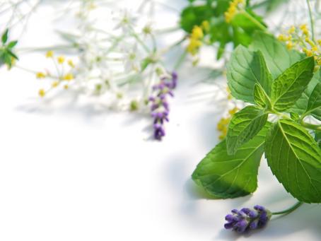 Aula 19: Ervas e plantas | Mente Criativa com Vovó Maria Conga