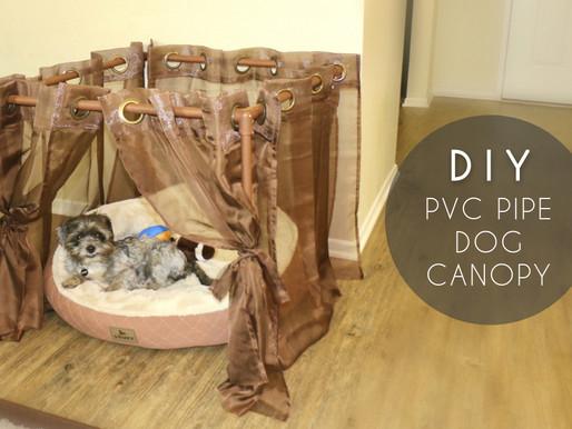 DIY PVC Pipe Dog Canopy