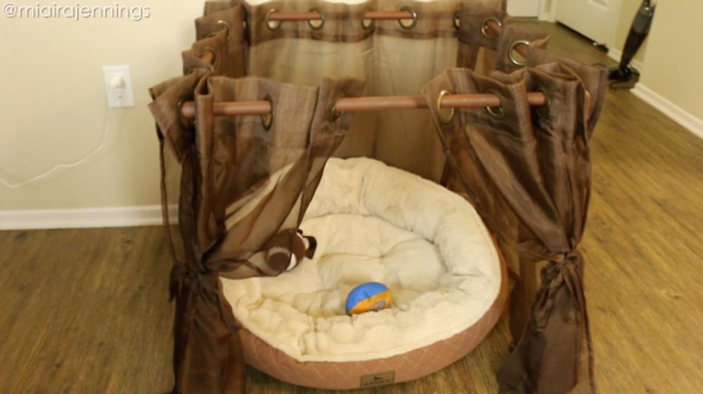 add dog bed