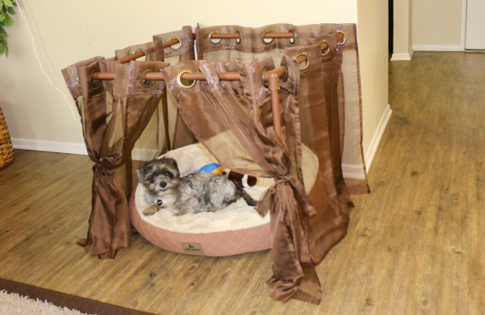 DIY PVC pipe dog canopy project
