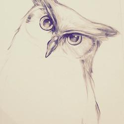 Birds Dreams