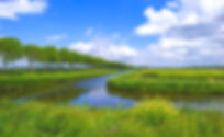 Wild-flowers-along-the-shore-of-a-canal-