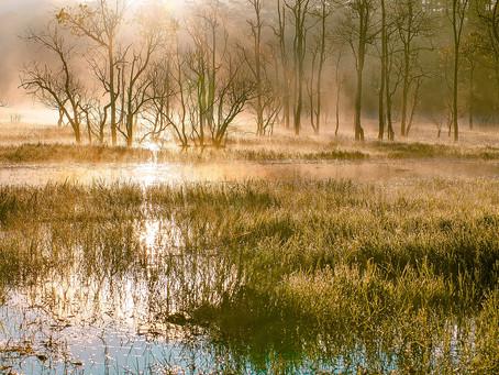 L'univers du Marais des Sauryls