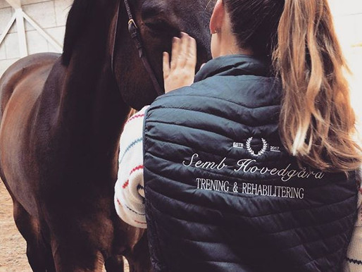 Why the horse-human interaction is a key element