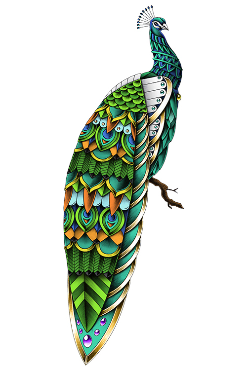 Ornate Peacock