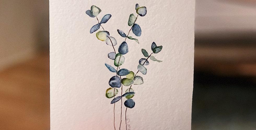 Eucalyptus sprigs