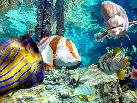 What Does All-Inclusive Mean at Discovery Cove?