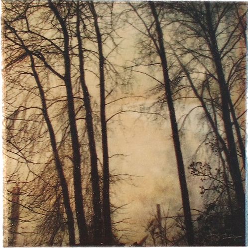 Wood Art Coaster featuring foggy trees from the Fraser River.