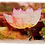 Marble Photo Art Coaster - Lotus Flower