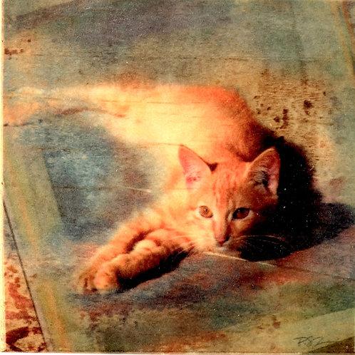 Wood Art Photo Coaster - Pomodoro - Italian Cat - Photo Images printed on Marble and Wood