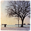 Marble Photo Art Coaster  - Second Beach - Winter Trees - Photo Images printed on Marble and Wood