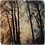 Marble Art Coaster  - Foggy Trees - Fraser River