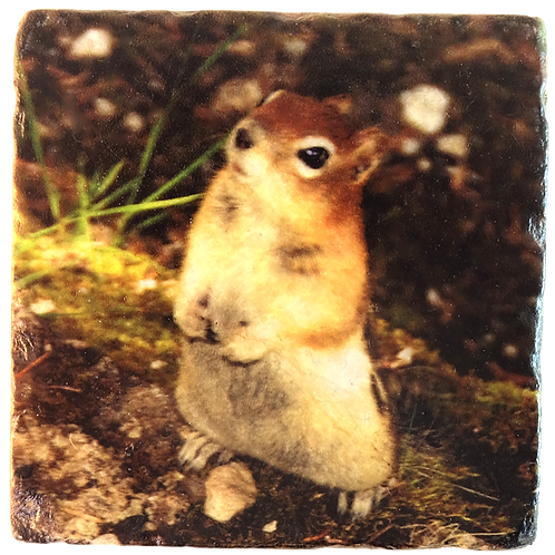 Marble Photo Art Coaster  - Chipmunk - Photo Image prints on Marble and Wood Panel