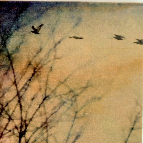 Wood Art Photo Coasters - Foggy Birds on the Fraser - Photo Images printed on Marble and Wood