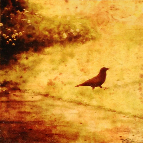 Wood Art Photo Coaster - A Walk in the Park - Crow - Photo Images printed on Marble and Wood