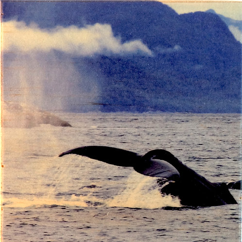 Wood Photo Art Coaster - Humpback Whale - Photo Images printed on Marble and Wood