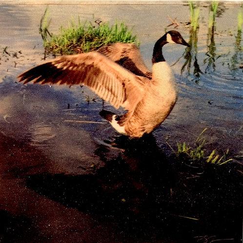 Wood Art Coaster - Canada Goose