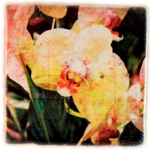 Marble Art Photo Coasters - Orchid Collage