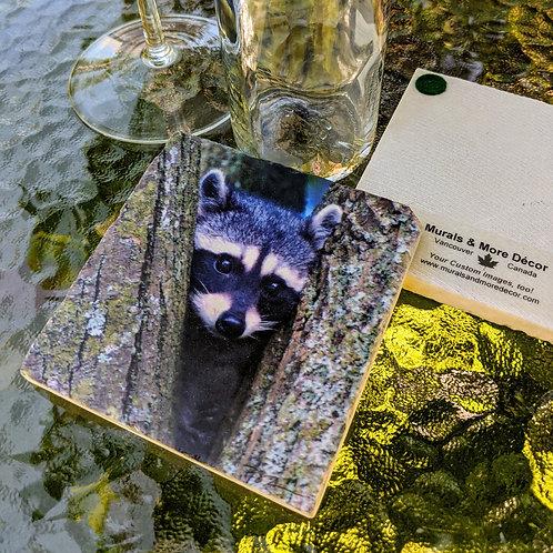 Raccoon-Marble Coaster