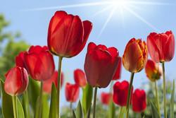 Цветы_161