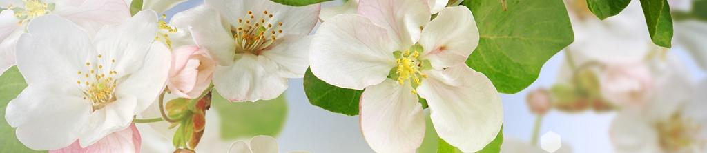 S_цветы_168