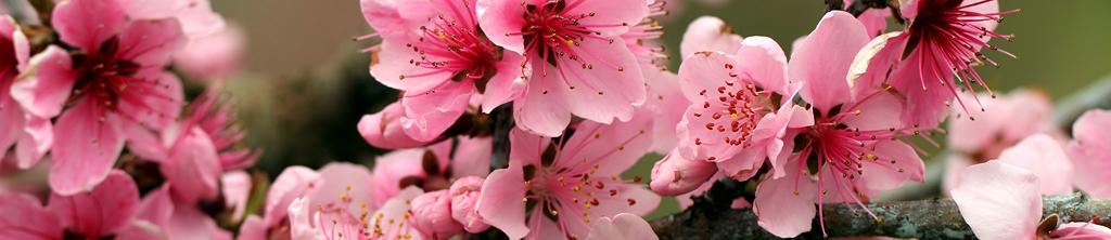 S_цветы_228