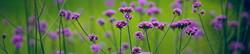 S_цветы_052
