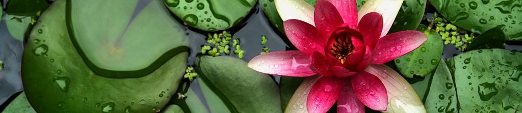 S_цветы_173