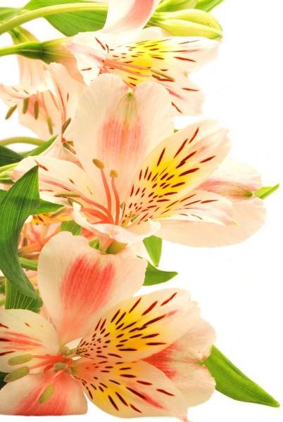 Цветы_091