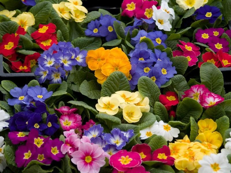 Цветы_023