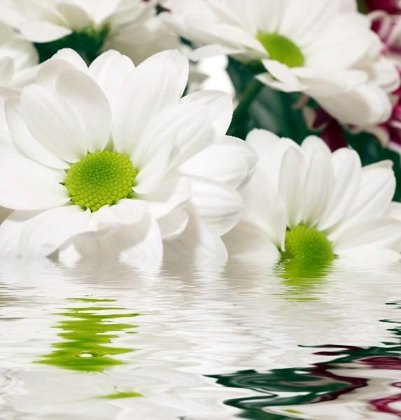 Цветы_198