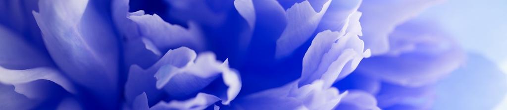 S_цветы_202