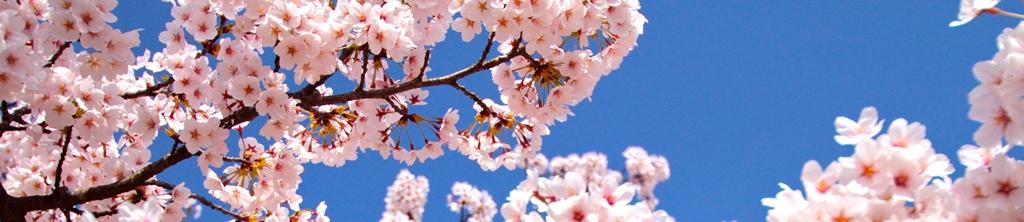 S_цветы_174