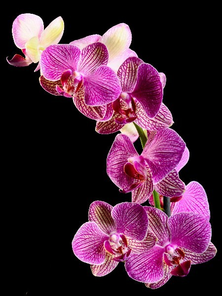 Цветы_131