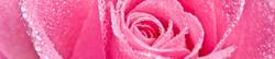 S_цветы_036