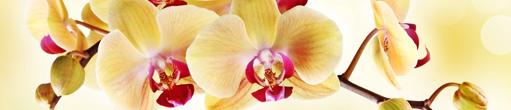 S_цветы_203