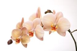 Цветы_096