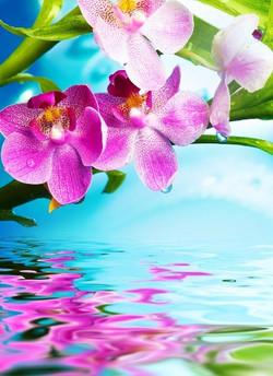 Цветы_222