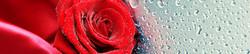 S_цветы_129