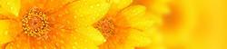 S_цветы_267
