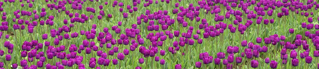 S_цветы_124