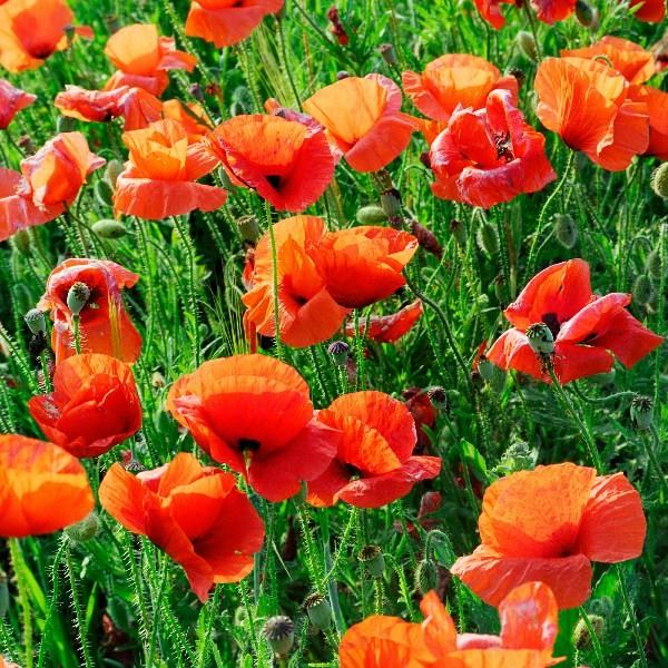 Цветы_204