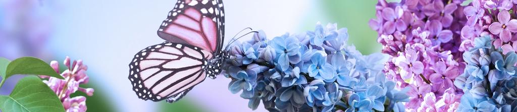 S_цветы_268