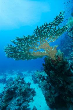 Морская тема_463